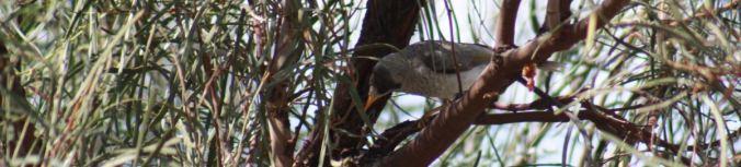 Lyrup Flats Bird